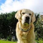 肥満犬が注意したい病気ガイド 太りすぎは命の危険も!?