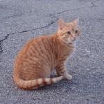 見捨てられない! 保護したい野良猫を捕まえる方法とは?