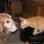 犬と猫が仲良しになるための飼い方ガイド