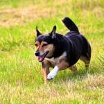 愛犬がドッグランに行っても他の犬のように走らないのはなぜ?