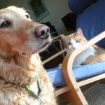 どっちが臭い?犬と猫のにおいを比較してみる!
