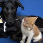犬と猫の違い 基本の基本をチェック!