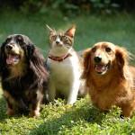 犬と猫の違い 性格はどんな感じ? 実体験からの比較