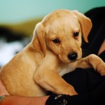 社会性の時期 生後2ヶ月の子犬の育て方で気を付けること