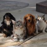 犬や猫を飼う前に!生涯飼育費用について考えよう