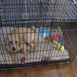 犬のケージの置き場所 家の中のどこがベストポイント?