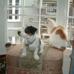 目指せご長寿!犬と猫の寿命について考えてみる