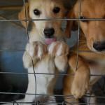 犬が虐待されているのを知った時、どのように行動するべき?