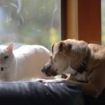 犬と猫を一緒に飼うってどれくらい難しい? 実体験からのアドバイス!
