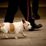 散歩中に犬がリードを噛む理由はストレスが原因の場合も!