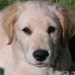 犬を飼うことを反対している家族に犬の魅力を伝えたい!説得の方法とは?