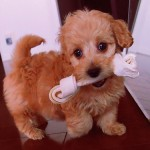 犬が引っ越し後吠えるように 実体験からの原因と対策