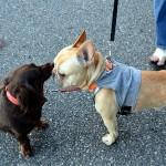 愛犬と散歩に行こう!お散歩の時間、距離の平均はどのくらい?