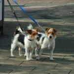 犬のリードはどうして必要? 適切な長さとマナーについて