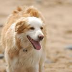 犬もストレスを感じる? 注意すべき症状はコレだ!