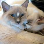 兄弟猫は仲良しでいてくれるってホントなの?