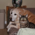 犬と猫が喧嘩をしたら強いのはどっち? 運動能力の違いからの考察