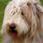 犬にとってのひげ 猫みたいに何か生活する上で意味がある?