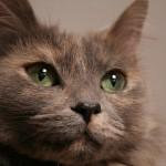 知っておきたい猫の認知症 どういった症状がでるの?