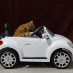 猫のストレスを減らして 一緒に楽しくドライブする方法ガイド