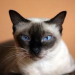 引っ越しで、猫が感じてしまうストレスを軽減させる方法