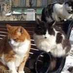 猫の喘息にかかる治療費はどれくらい? ペット保険の有用性は