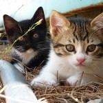 愛猫が喘息に! 原因を知る事で症状の緩和につながる場合も!