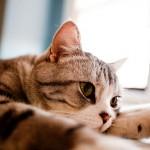 猫のワクチンにも人間のように副作用はあるの?