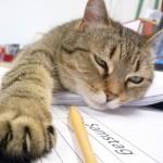 ストレスが不安!ペットホテルに猫を預けるときの注意点とは?