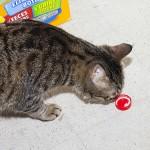 スッキリ快便生活!? 猫の便秘にはヨーグルトが効果的ってホント?