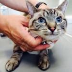 愛猫が癌に! 治療費はいくらくらいかかるもの?