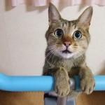 料金はどれくらい? 猫のトリミングの相場について
