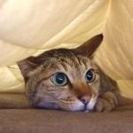 猫はまばたきをしない!? 実はゆっくりとしていて、分からないだけだった!?