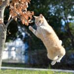 場所はどこ?意外に知らない猫のおへそを探しちゃおう!