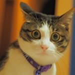 どうして人間とは違うの?まばたきをあまりしない猫の秘密を徹底解説しちゃいます!