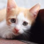 猫のてんかんと治療について 飼い主が知っておくべき基礎知識