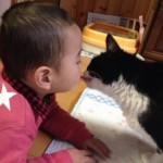 猫と赤ちゃん 幸せな同居のために知っておくべきこと!