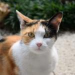 猫が春に鳴く理由 そこにはご先祖様ゆずりの知恵があった!