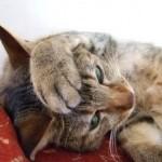 どういう意味があるの!? 意外に知らない猫の毛づくろいの秘密