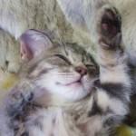 猫のいびきの原因は何!? もしかすると、隠された病気のサインかも!