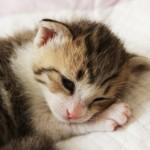 どうしても猫が飼いたい! 反対する家族を納得させる3つの説得法