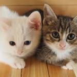 理由はなに!? 猫同士が喧嘩する原因を知ることで解決に繋がることも!