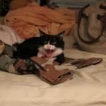猫が飼い主に威嚇をしてくる! そんなときの対処法とは