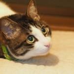 猫が飼い主さんの靴下の臭いを嗅ぐ理由は安心感を得るため!?
