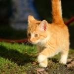 仲良し親子が一転!親猫が子供の猫に威嚇をする理由とは?
