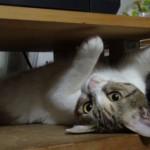人間に甘える猫 いったいどんな理由で甘えてくるの?