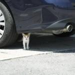冬場は特に危険! エンジンルームに侵入する猫はいったいどこから入ってる!?