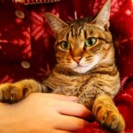 抱っこを嫌がる猫を抱っこ好きの猫ちゃんに変えちゃうマル秘テクニックとは