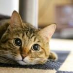 飼い猫のおならが多い! そんな時はお腹の健康状態がよくないサインかも?